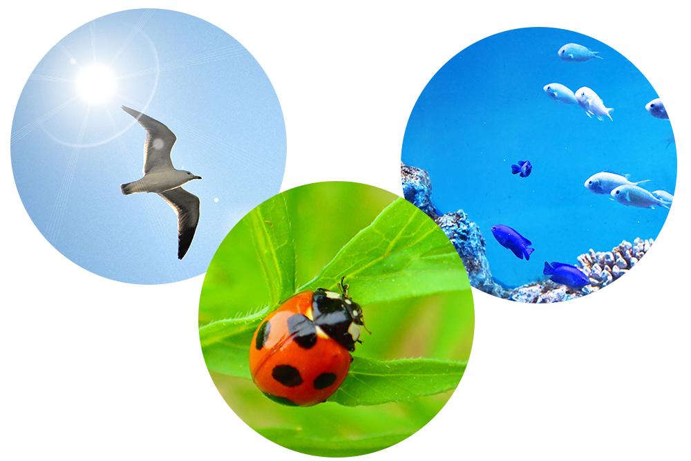 鳥、虫、魚の目